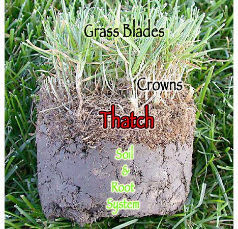 Lawn Dethatching Infinite Property Care