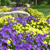 Caring for Perennials and Ornamental Grasses